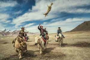 PhotoVivo Honor Mention e-certificate - Guoyun Zhang (China)  Rob Sheep Race 15