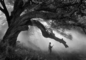 PhotoVivo Gold Medal - Gaochao Liu (China)  Buddhism Sound Under Banyan Tree