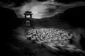 PhotoVivo Honor Mention e-certificate - Risheng Liu (China)  Herding