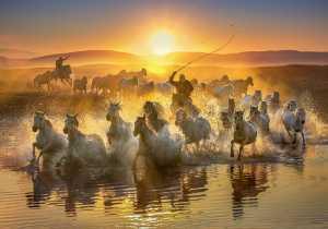 PhotoVivo Honor Mention e-certificate - Yuk Fung Garius Hung (Hong Kong)  Running Horses 3