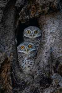 APU Gold Medal - Waranun Chutchawantipakorn (Thailand)  Two Owl