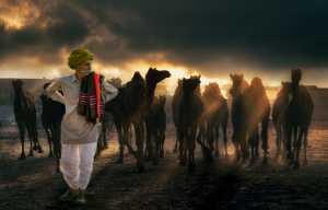 Circuit Merit Award e-certificate - Ranajabeen Nawab (India)  Pushkar Light And Art