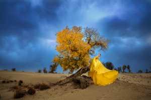 PhotoVivo Gold Medal - Guohao Chen (China)  The Verve Of Autumn