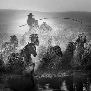 PhotoVivo Gold Medal - Ziyan Li (China)  Lead The Horses