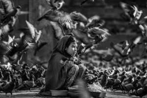 APAS Honor Mention e-certificate - Yinghua Min (China)  Pigeons