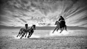 APU Spring Merit Award E-Certificate - Hugo Chan (USA)  Horses Looping