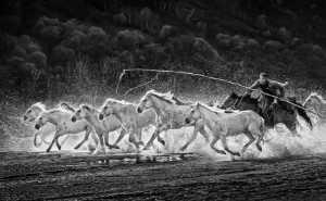 PhotoVivo Gold Medal - Arnaldo Paulo Che (Hong Kong)  Horse Looping 6