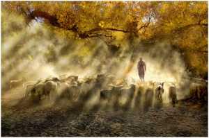 Best 100 Collection - Thomas Lang (USA)  Herding Light