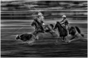 PhotoVivo Silver Medal - Triet Bui (USA)  Chasing The Cow