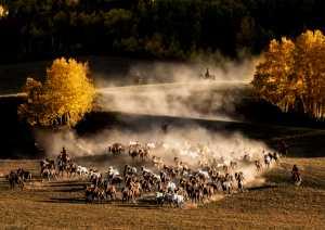 Circuit Merit Award e-certificate - Hung Kam Yuen (Australia)  Team Of Horse Herding