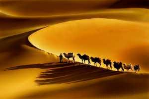 Circuit Merit Award e-certificate - Gwolong Chang (Taiwan)  Camel Home