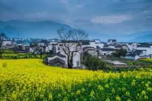 PhotoVivo Gold Medal - Hong Zhang (China)  Wuyuan Scenery