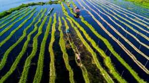 PhotoVivo Gold Medal - Jing Li (China)  Lines