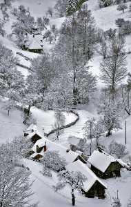 APU Gold Medal - Istvan Magdo (Romania)  Winter Stillness