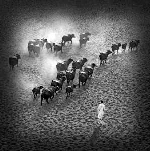 SIPC Gold Medal - Sami Ur Rahman (Pakistan)  The Long Walk Home