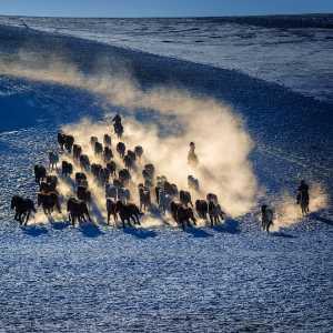 APAS Gold Medal - Xilian Li (China)  Horses 1